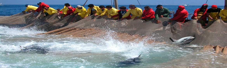 La grande pesca sostenibile del passato, la mattanza. Il metodo che le Tonnare italiane utilizzavano per la pesca del tonno